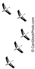 Sandhill Crane - sandhill, crane, grus, canadensis, bird,...