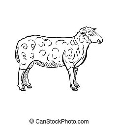 doodle sheep - Doodle Sketchy Sheep. Vector Illustration....