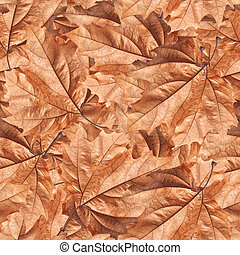Dry autumn leaves background Seamless pattern