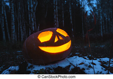 Pumpkins for Halloween - Lying in the woods pumpkin with...