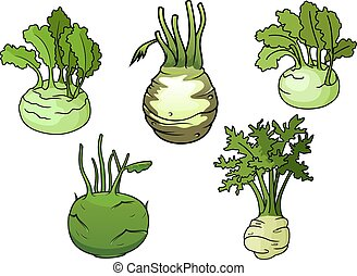 Fresh isolated kohlrabi cabbage vegetables - Ripe kohlrabi...