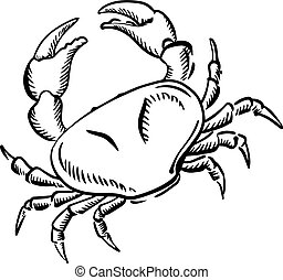 Marine crab with big claws, sketch