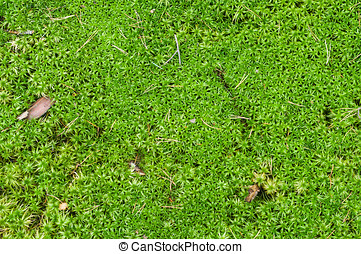 Natural background of sphagnum or peat moss