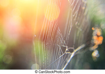 Detail of spider web