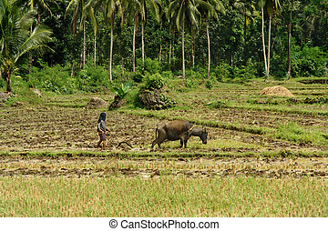 Asian primitive farming - Southeast Asian poor farmer...