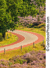 Blooming heathland with road at the Dutch Veluwe national...