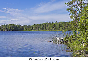 Lake in Karelia - Lake on a sunny summer day Karelia, Russia...
