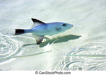 little fish isla contoy in day wave - little fish isla...