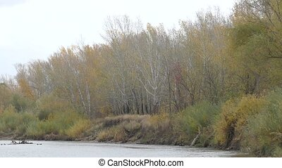 Ural River in autumn - The Ural River is the natural...