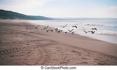 Seagulls Make Takeoff from the Ocean Beach, slow motion