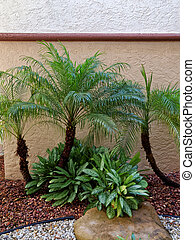 Small Palm Trees in Rock Garden - Small Palm Trees in rock...