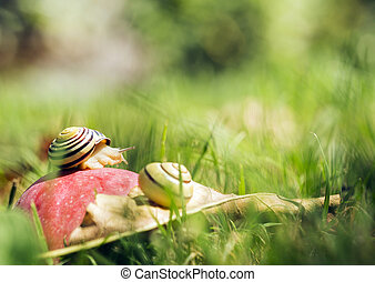 Snails on an apple - Two snails crawling on an apple