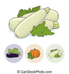 Icons Zucchini, Pumpkin, Eggplant - Zucchini Vegetable with...