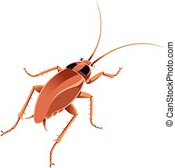 Cockroach - Vector image of an cartoon brown cockroach