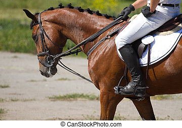 Dressage horse and a rider .