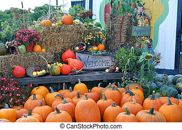Fall Harvest - Colorful Harvest