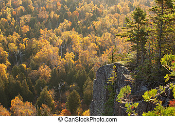 Backlit cliff with pines above trees in fall color on Oberg Mountain in northern Minnesota