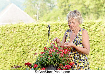 middle-aged woman with a flowering plant in the garden - a...