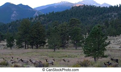 Elk Migration Rocky Mountain National Park Tripod Steady