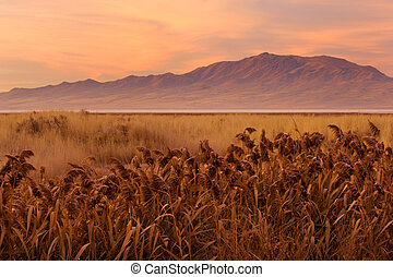 Prehistoric landscape - Sunrise over grassland of Antelope...