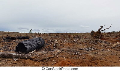 Deforestation and logging - Deforestation and logging This...
