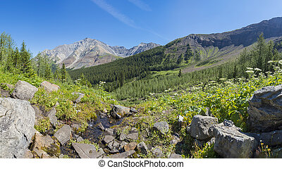 Alpine Meadow in the Rocky Mountains Alberta Canada