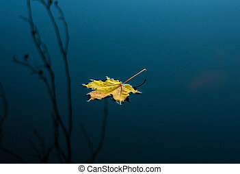 Maple yellow leaf - Maple leaf on a dark autumn water in the...