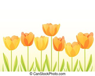 Tulips in a row with space for text, vector illustration