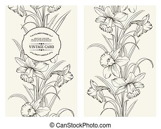 Daffodil flower - Daffodil flower or narcissus isolated on...