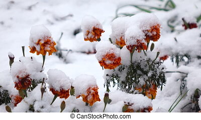 Orange flowers with snow