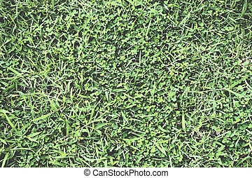 Abstract green grass background or texture