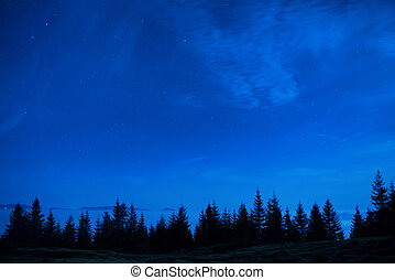 Forest of pine trees under blue dark night sky