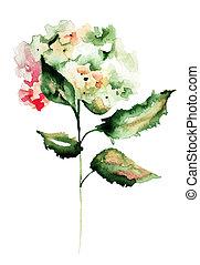 Hydrangea flowers, watercolor illustration