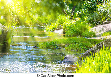 Stream in the green forest and sun shining through foliage