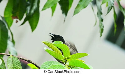 Portrait of a bird on tree