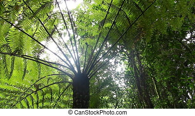 Tree Fern Rainforest - Australian Landscape - This tree fern...