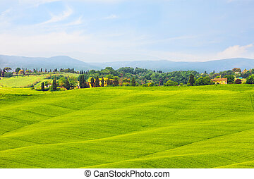 Beautiful summer rural landscape, Tuscany, Italy