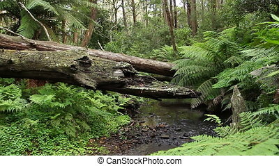 Rainforest - Australian Landscape - This rainforest...