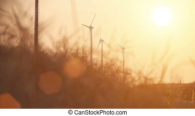 wheatfield at sundown and electric wind mills - panoramic...