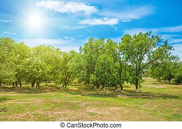 Green park with trees and blue sky - Green trees in a park....