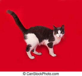 Grey and white cat standing on red