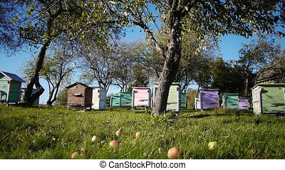 Honey bee hives in autumnal apple g