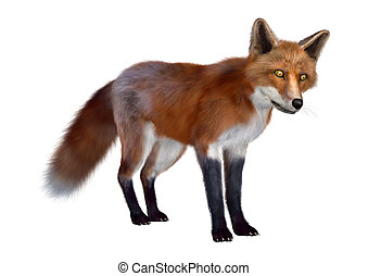 Red Fox - 3D digital render of a red fox standing isolated...