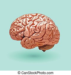 realistic human brain on a blue background .