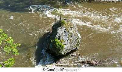 big rock with young tree in mountain river