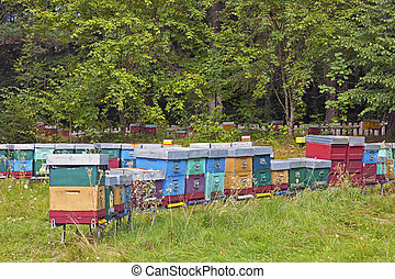 Hives in the Trentino-Alto Adige - Bee-keeping with Hives in...