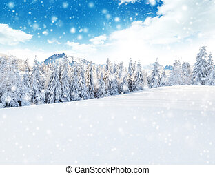 Winter snowy landscape - Winter snowy forest with meadow and...