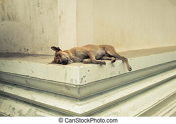 Homeless dog is sleeping on the floor in a temple, vintage...