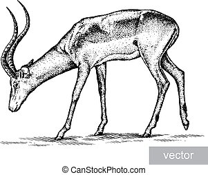 antelope - engrave isolated antelope vector illustration...