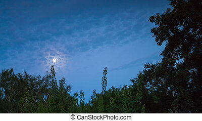 Night moon rises on the horizon and trees on the background...